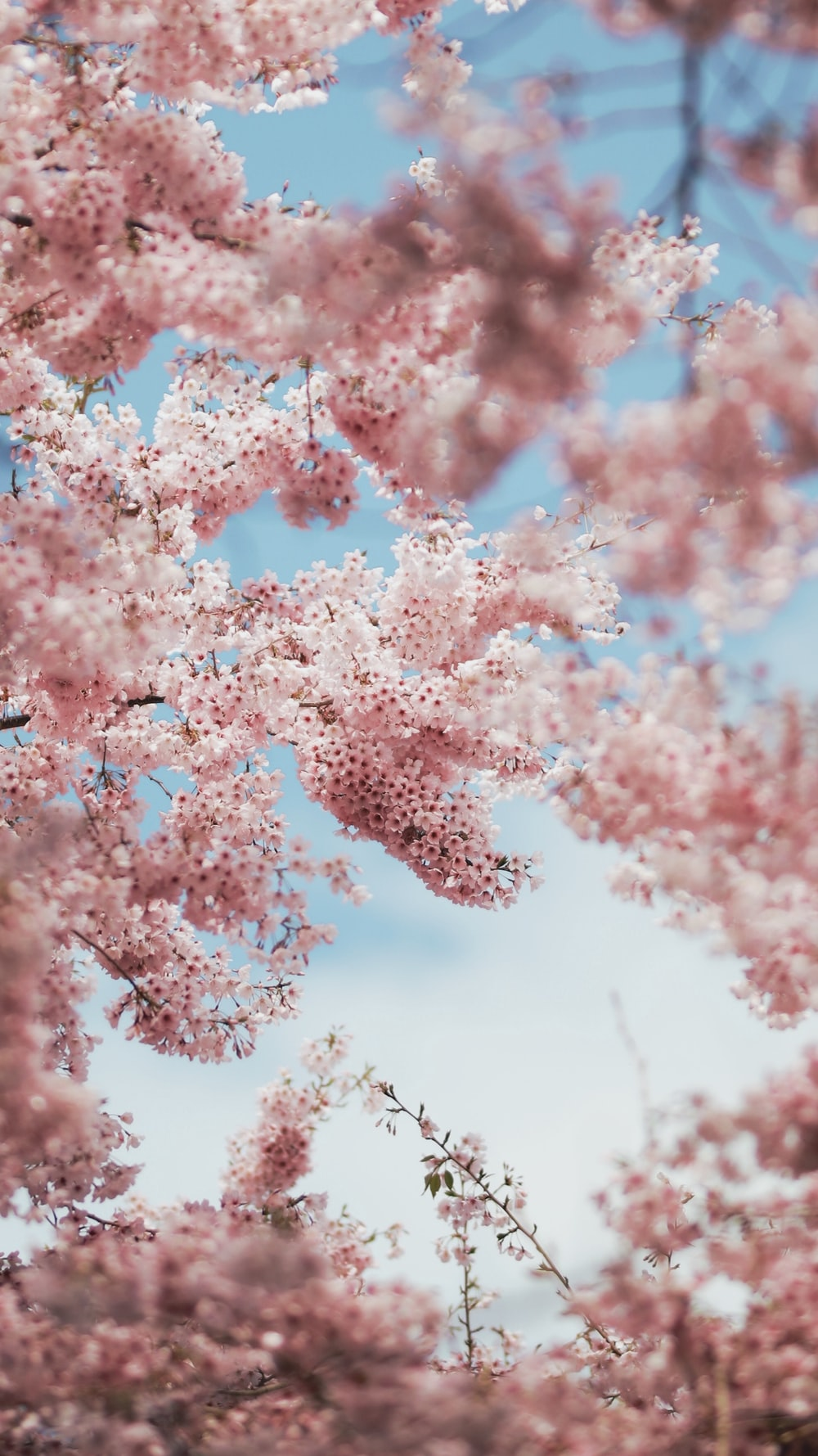 selective focus photography of pink trees