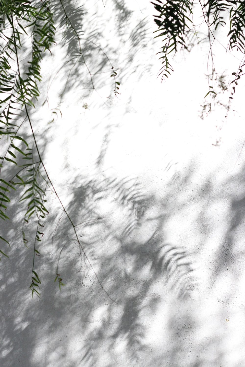 green tree leaves casting shadow on grround