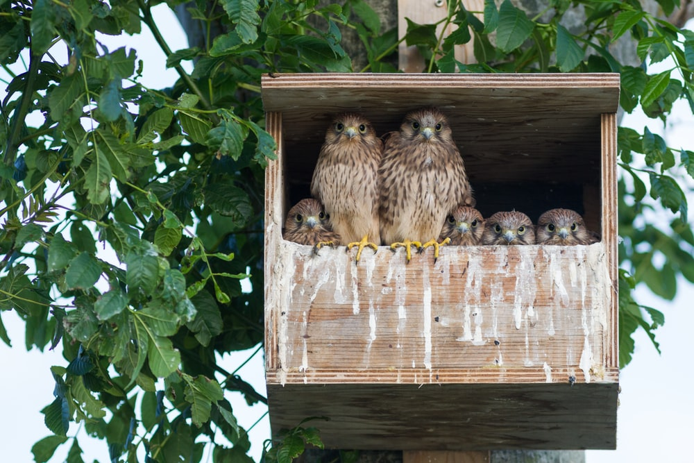 brown own in birdhouse during daytime