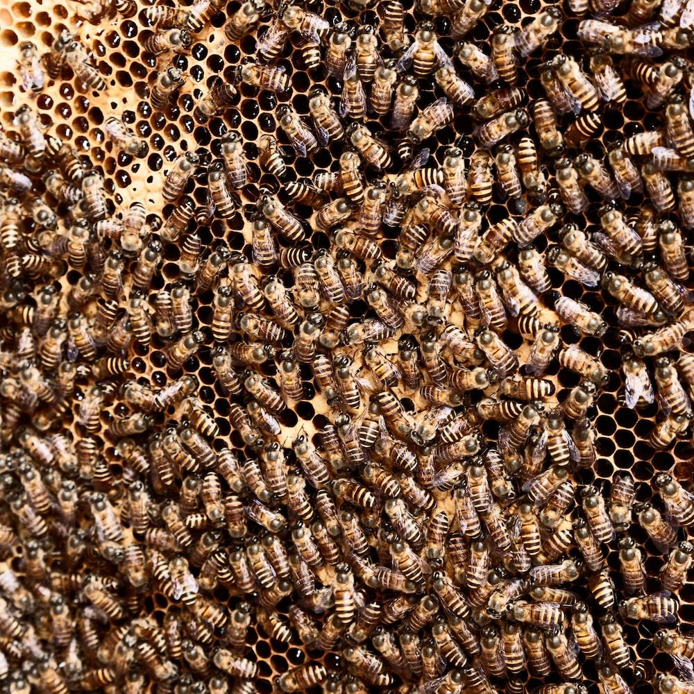 brown beehive