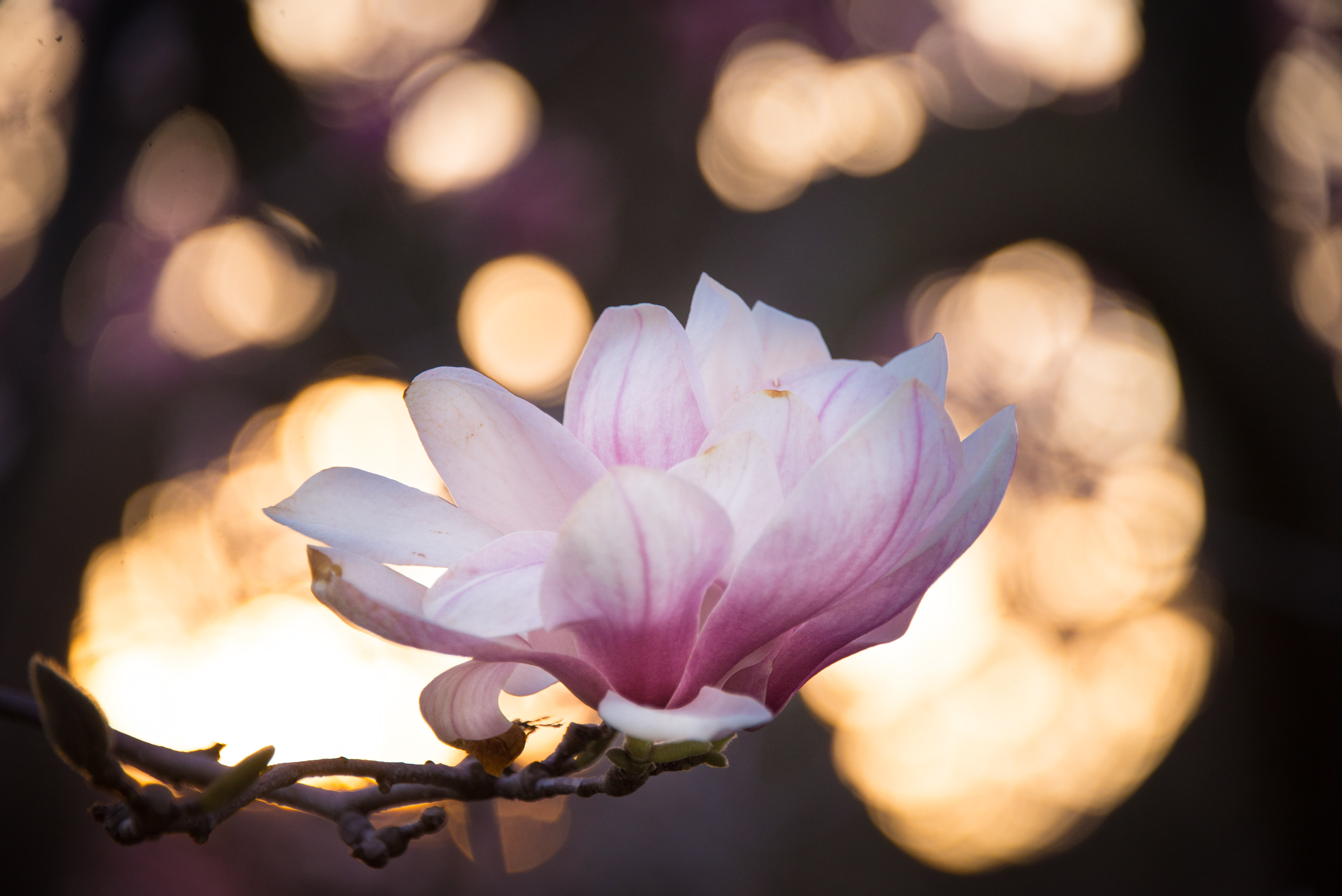 pink flower with light bokeh