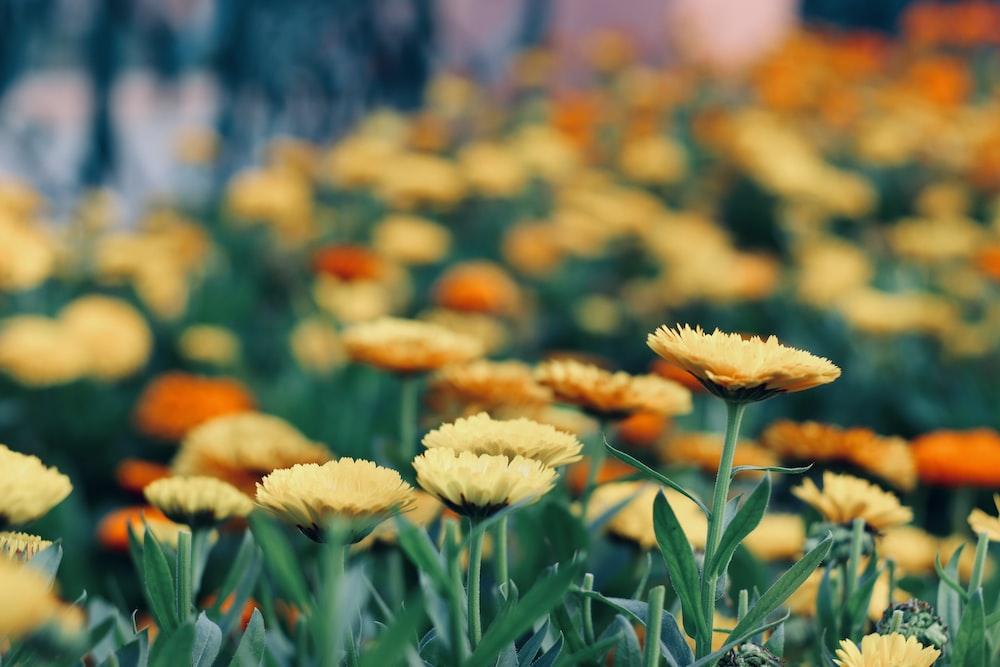 green and orange petaled flower