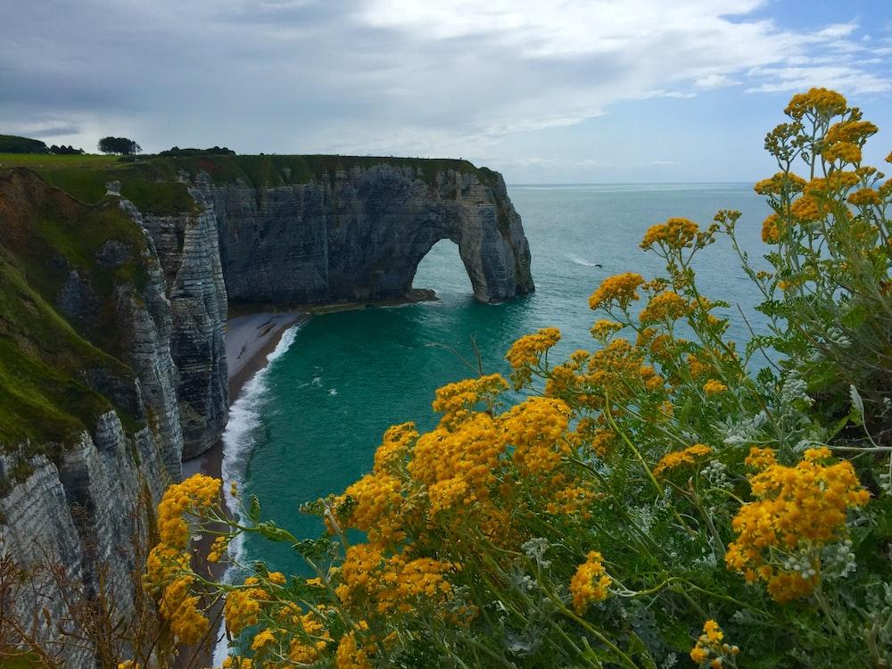yellow flowers near sea