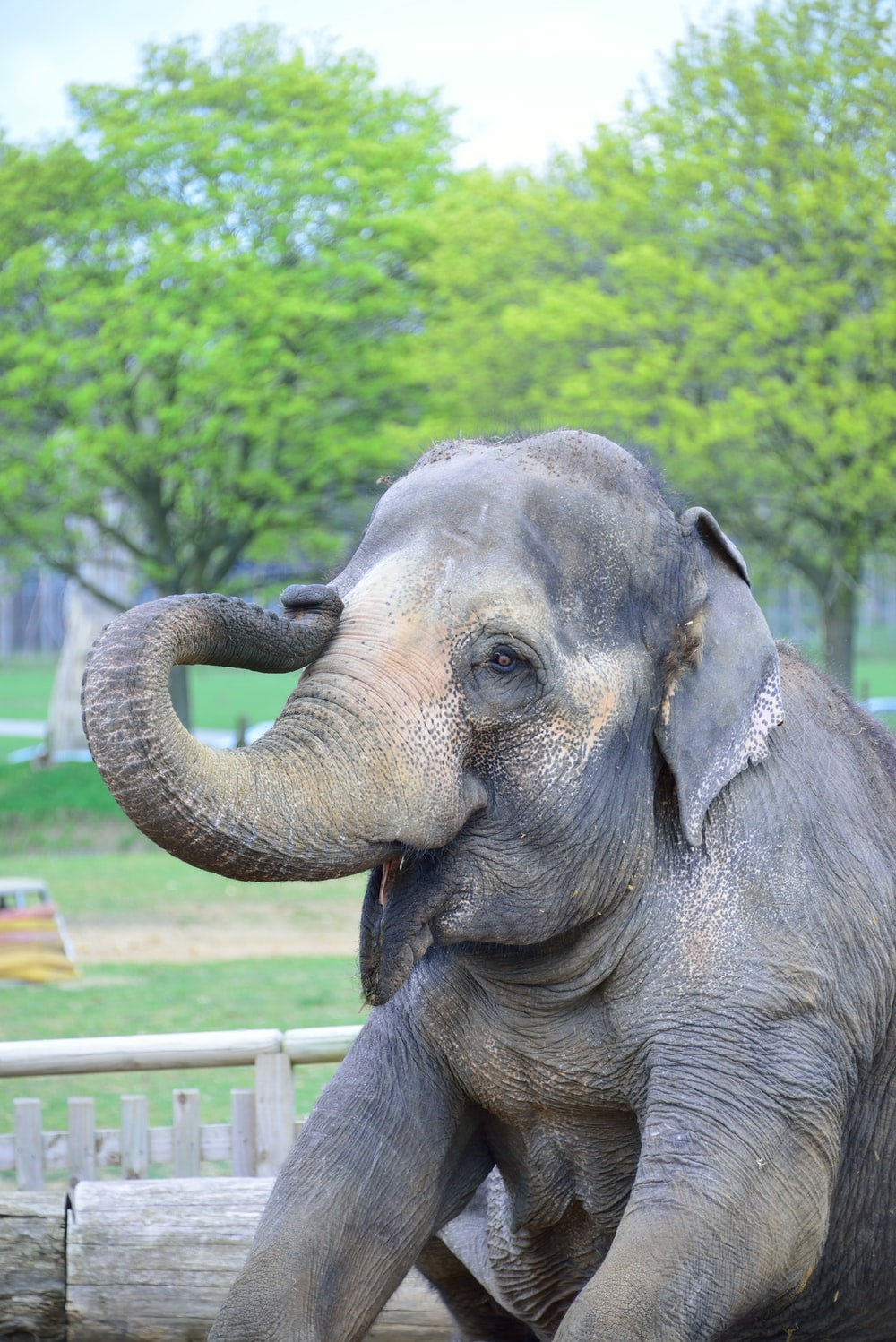 gray and brown elephant during daytime