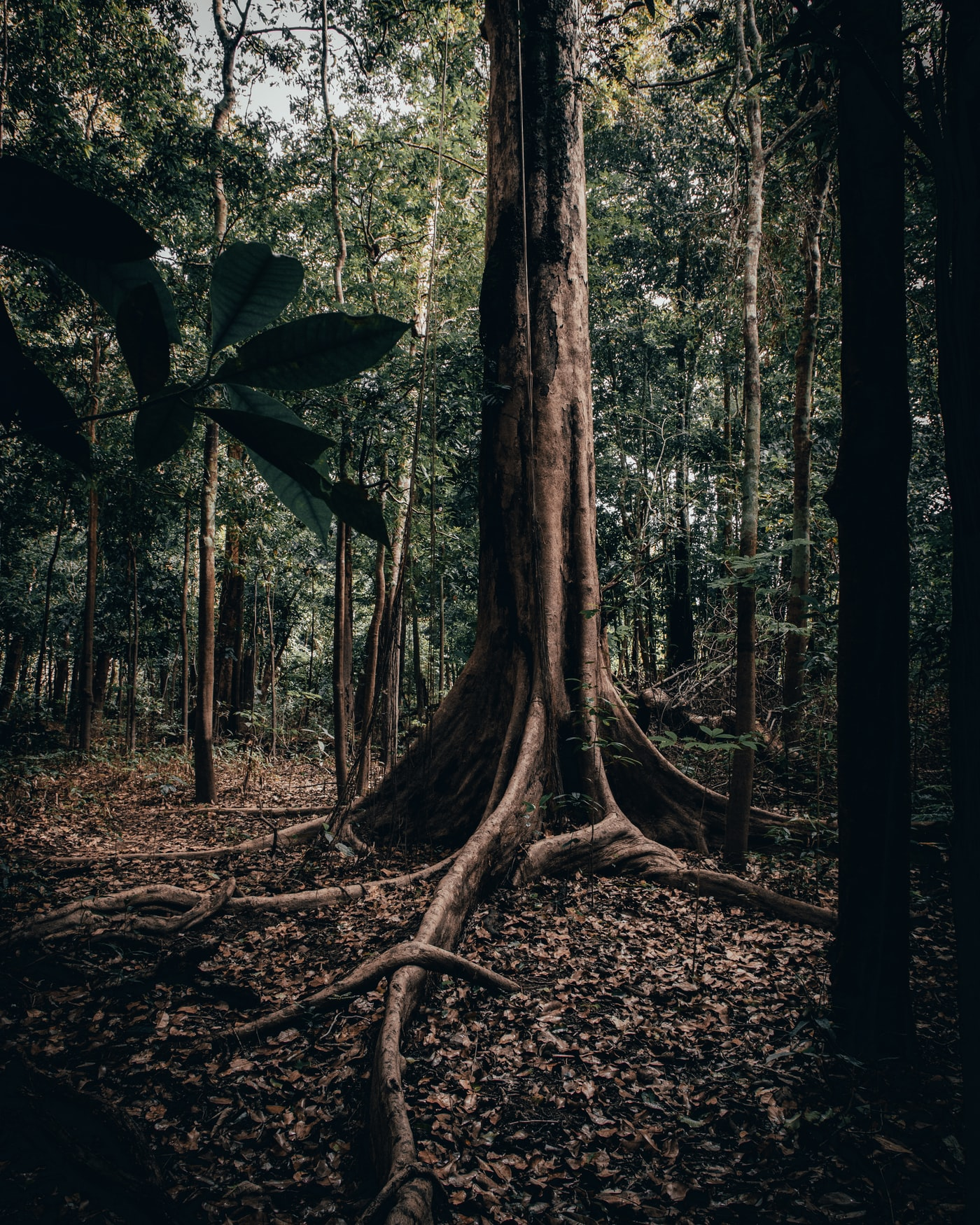 geren woods