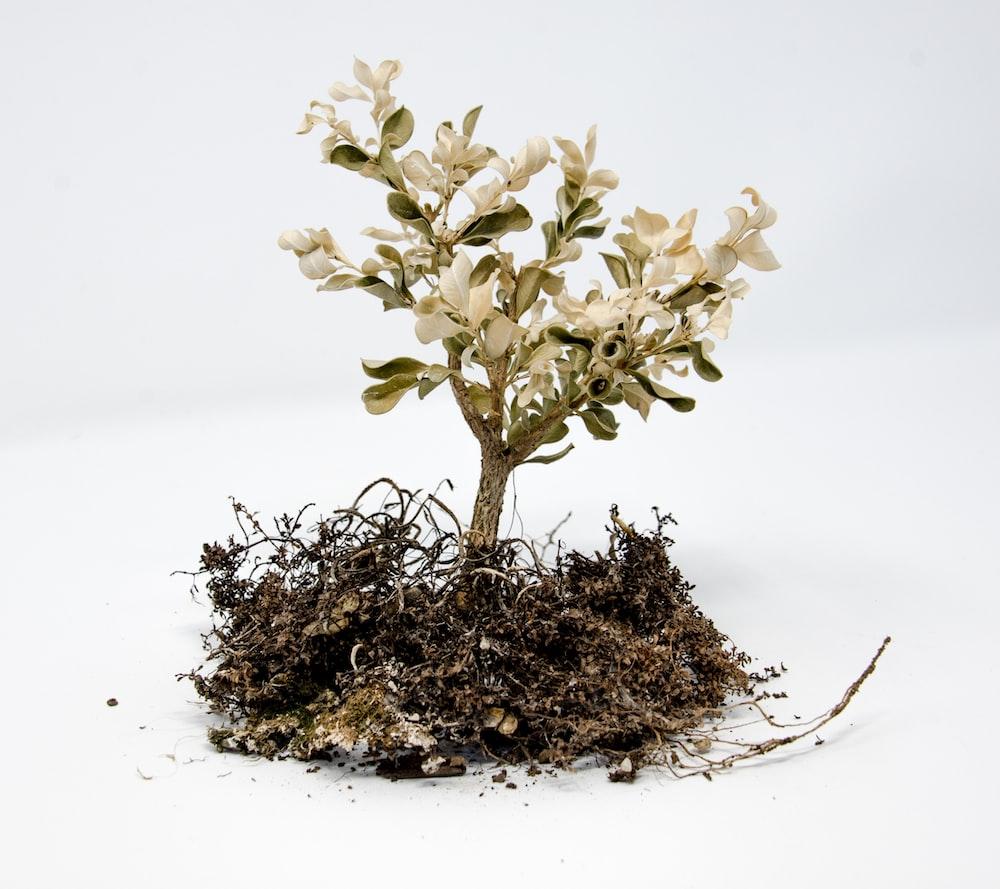 white-leafed plant