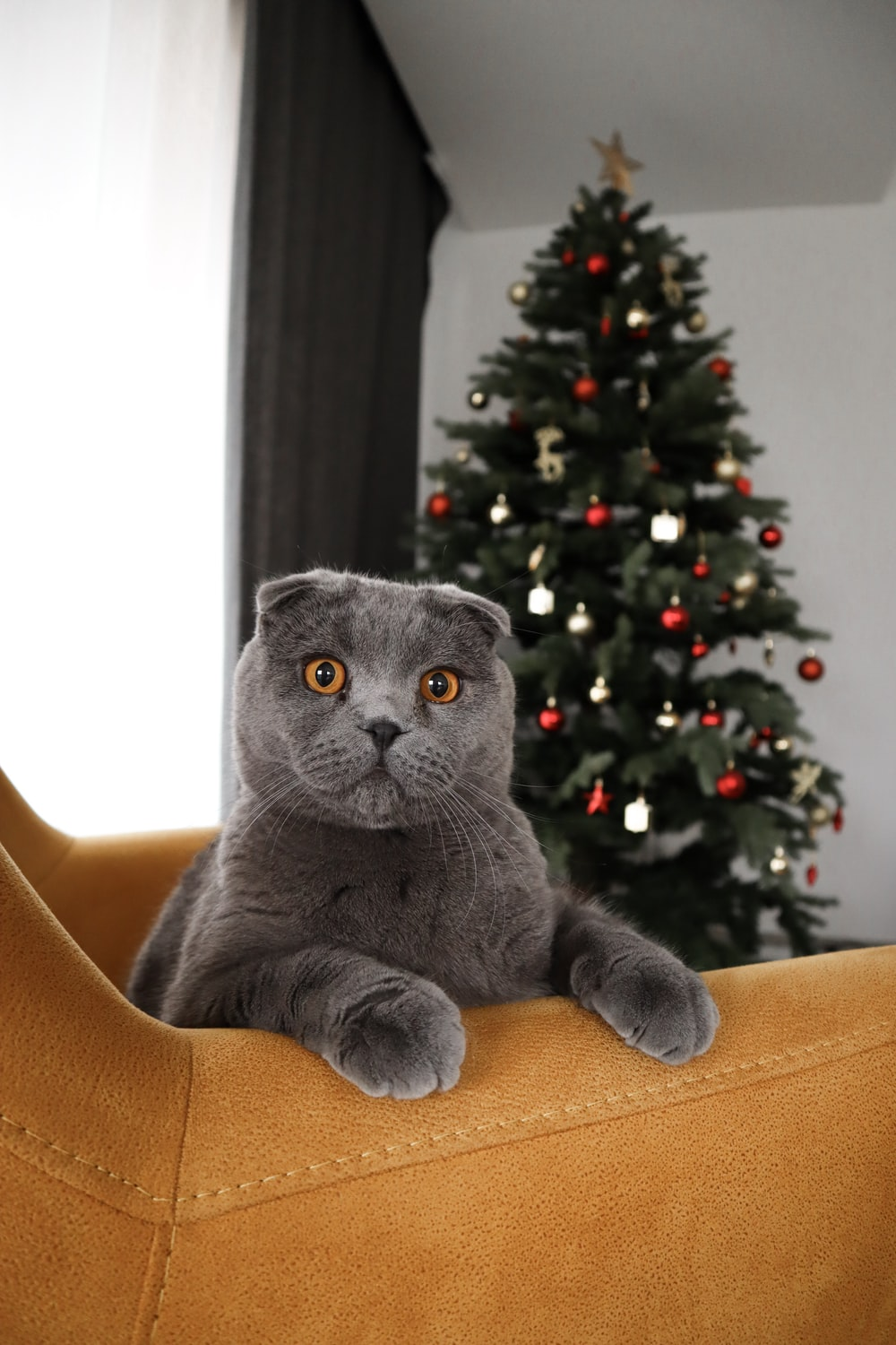 gray cat on brown sofa