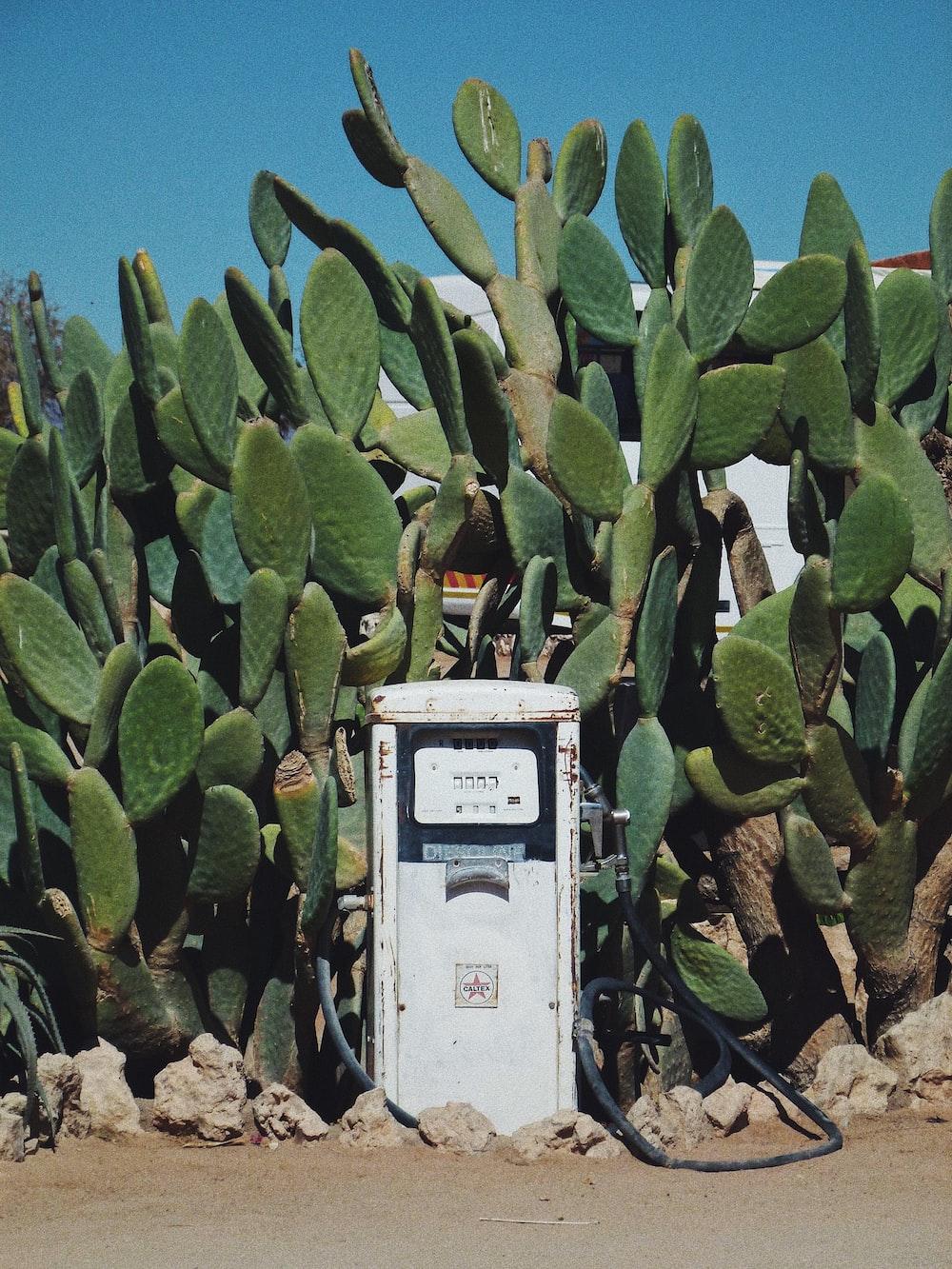 white gasoline pump machine surrounded by cactus plants