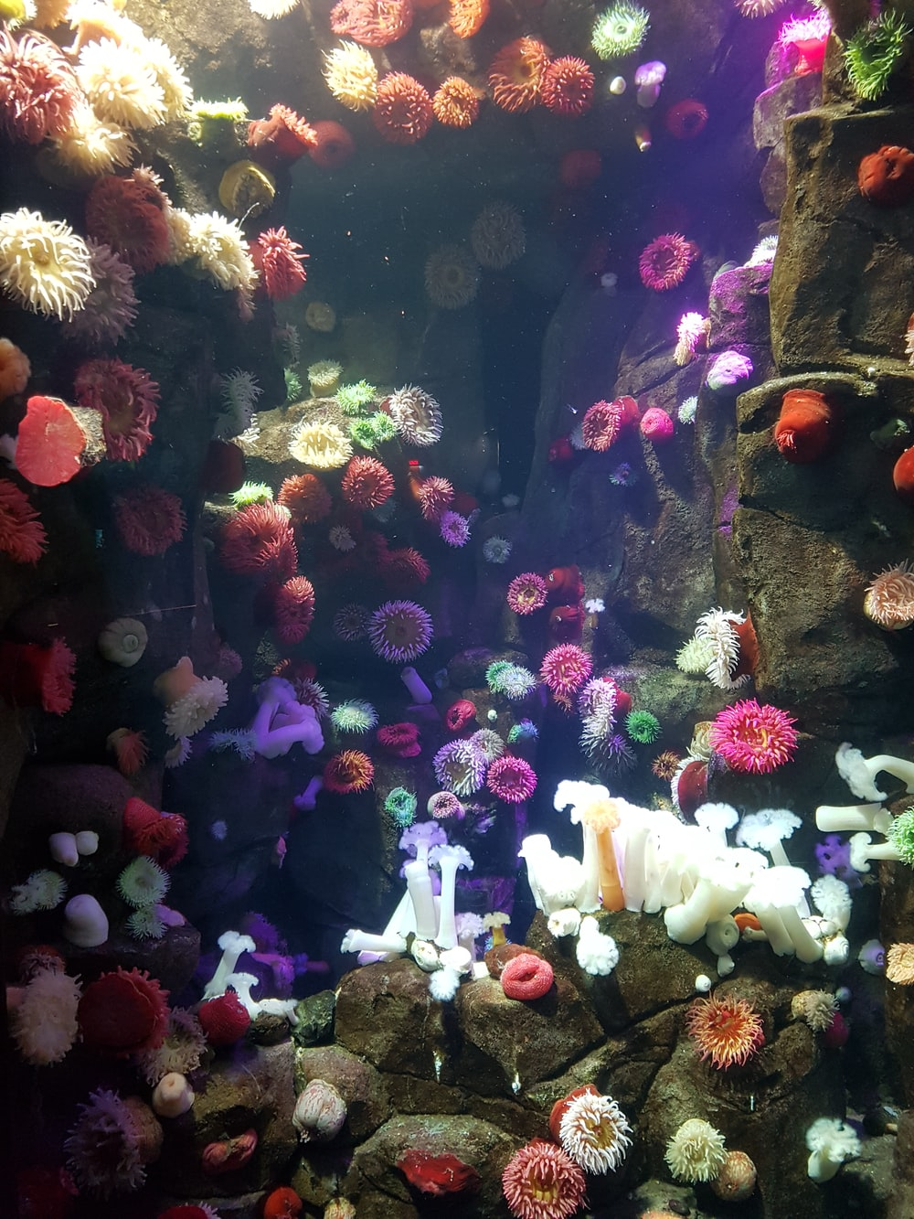 red and white sea corals
