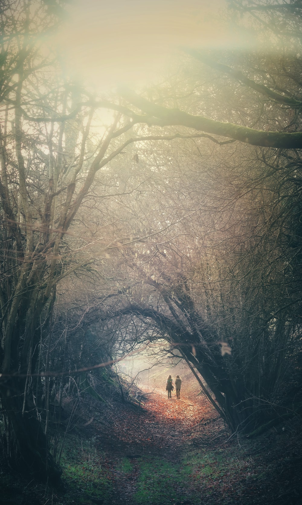 two person walking in between trees
