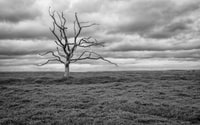 leafless tree grayscale photography
