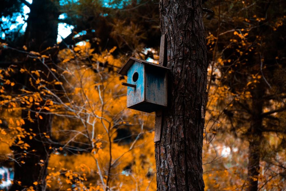 blue wooden birdhouse near brown tree