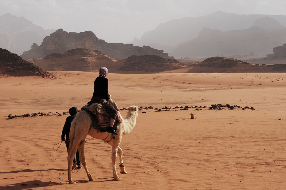 person riding on white camel near mountain