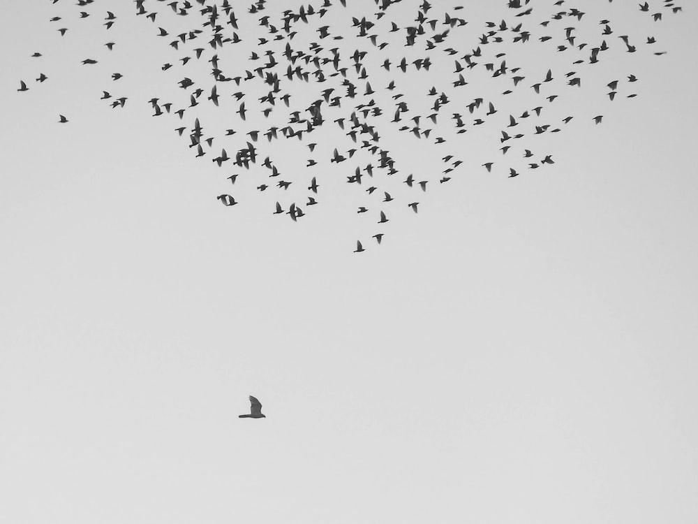 flock of birds flying at daytime