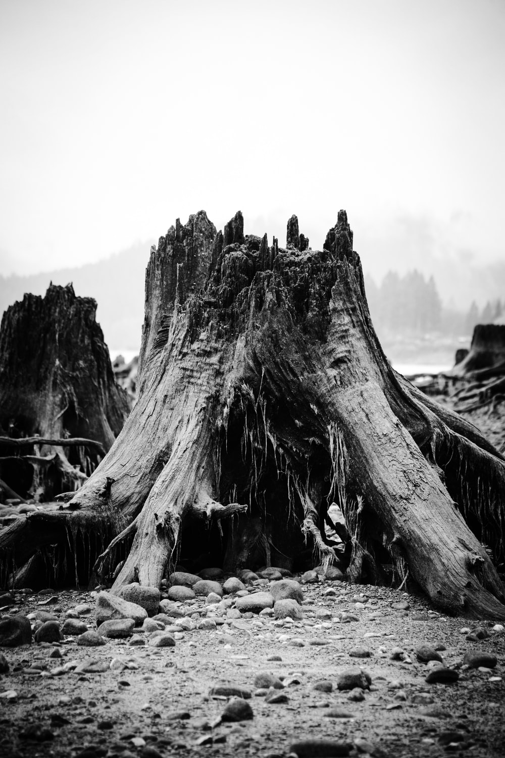 grayscale photography of cut tree log