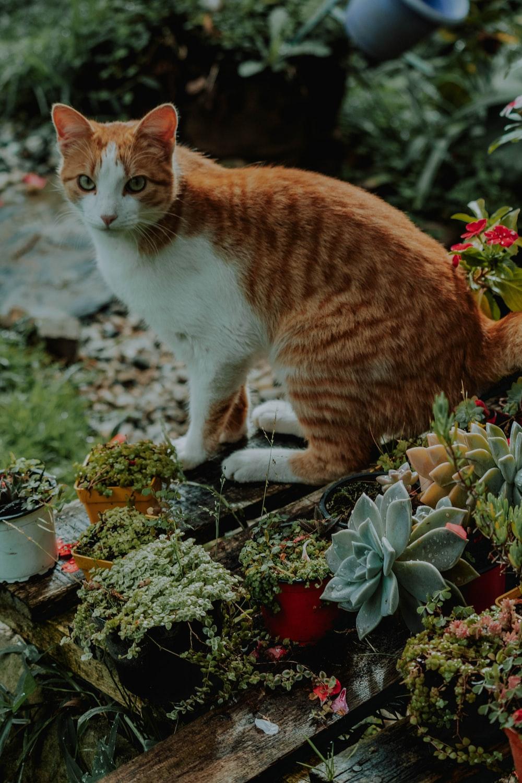 orange and white cat on garden