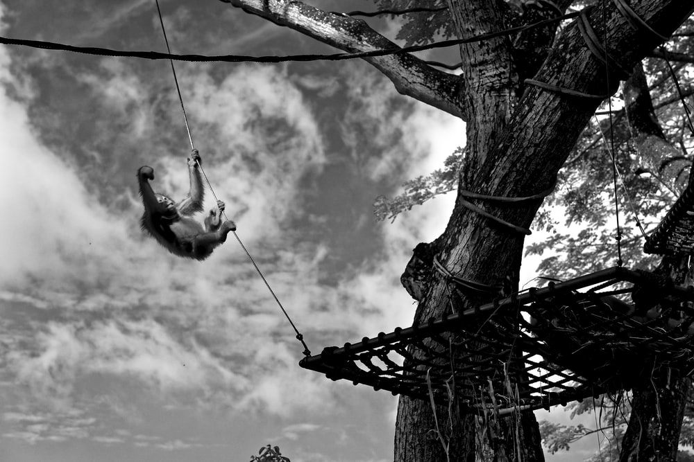 grayscale photo of monkey hanging on rope
