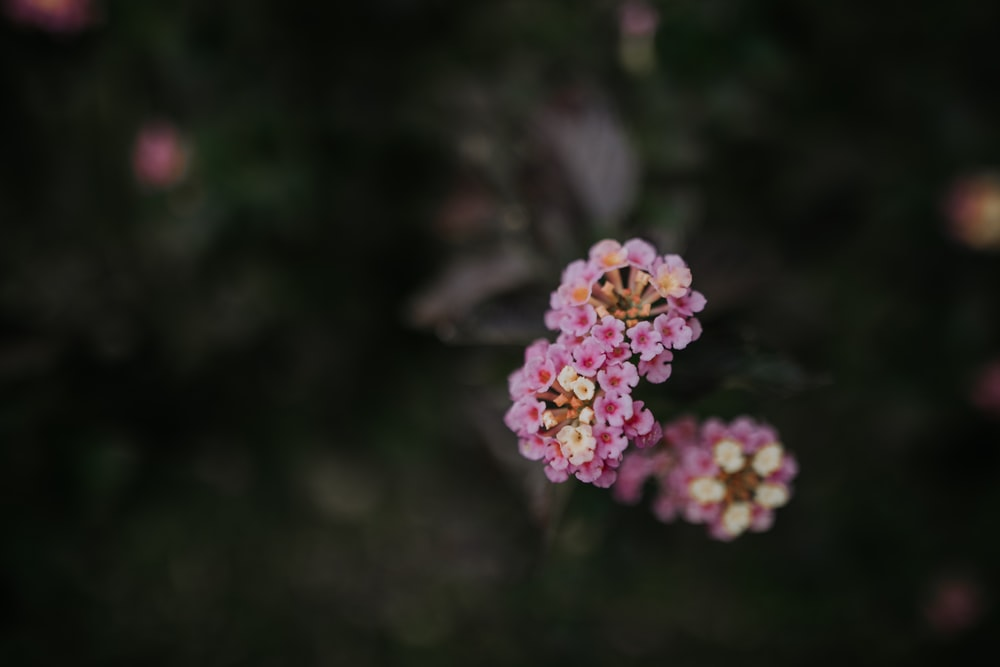 selective focus photography of purple-petaled flowers