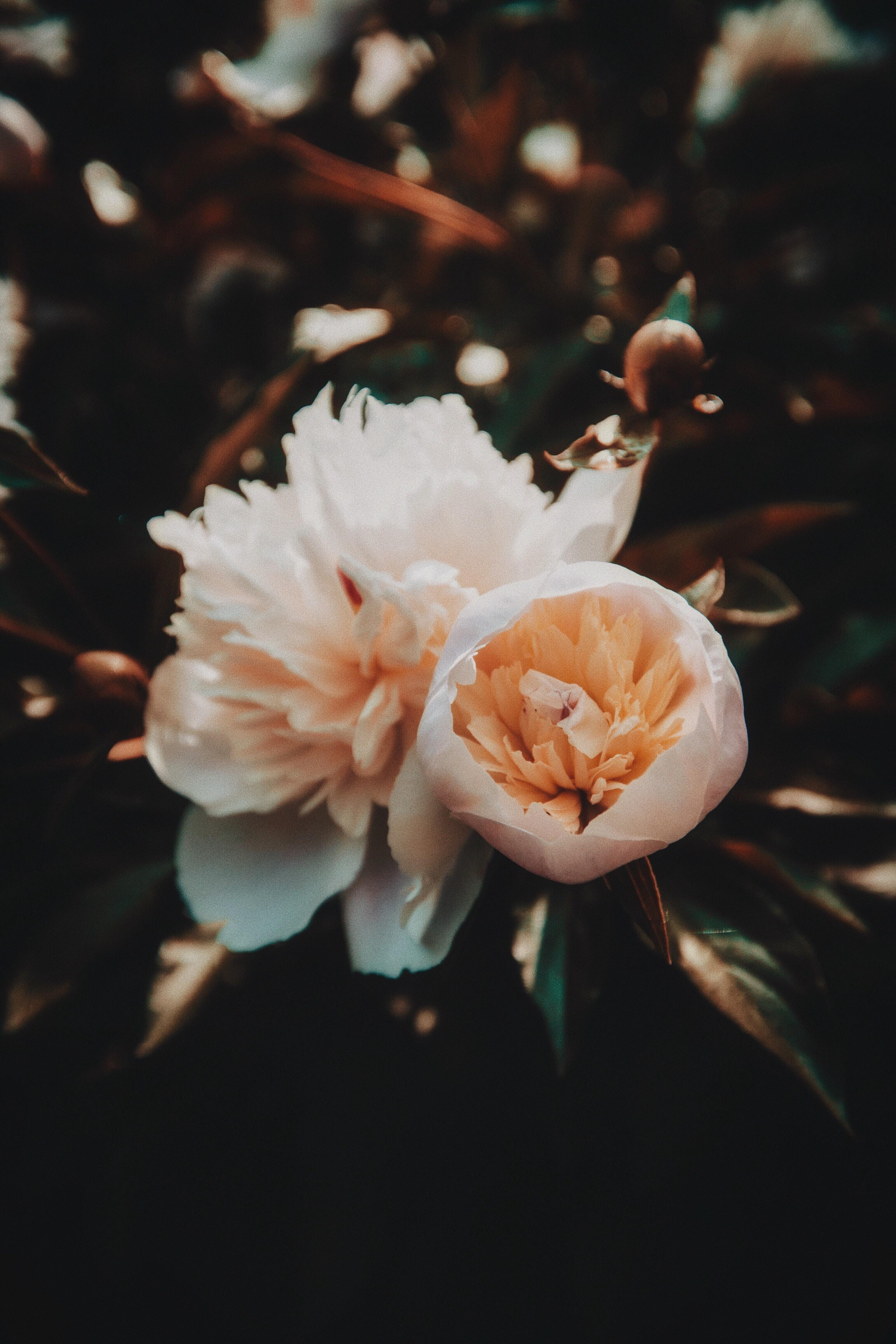 white and orange petaled flower