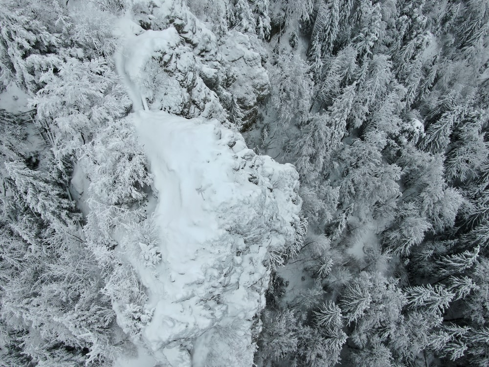 grayscale and aerial view photography of forest