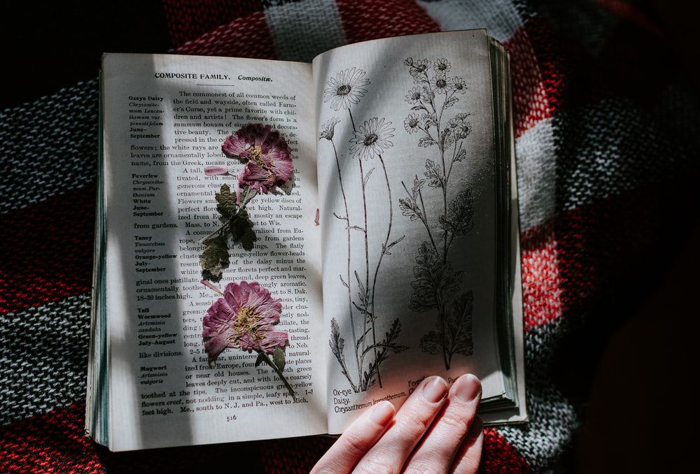 pink flowers in book