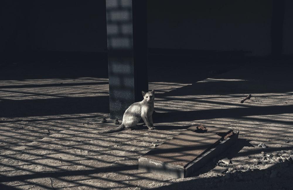grayscale photo of gray cat near concrete post