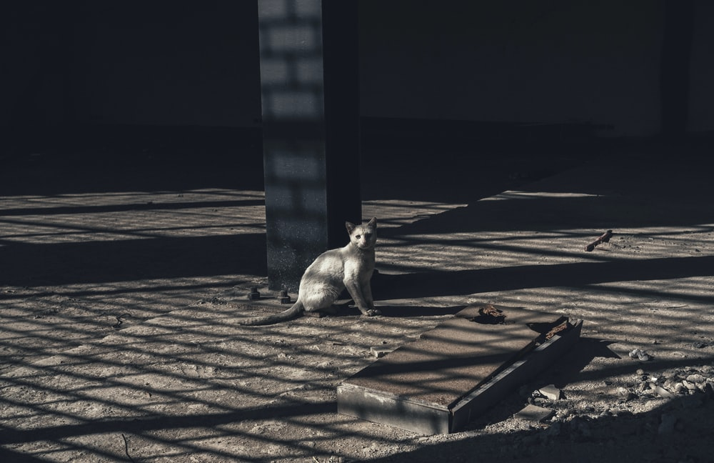 grayscale photo of gray cat near concrete post