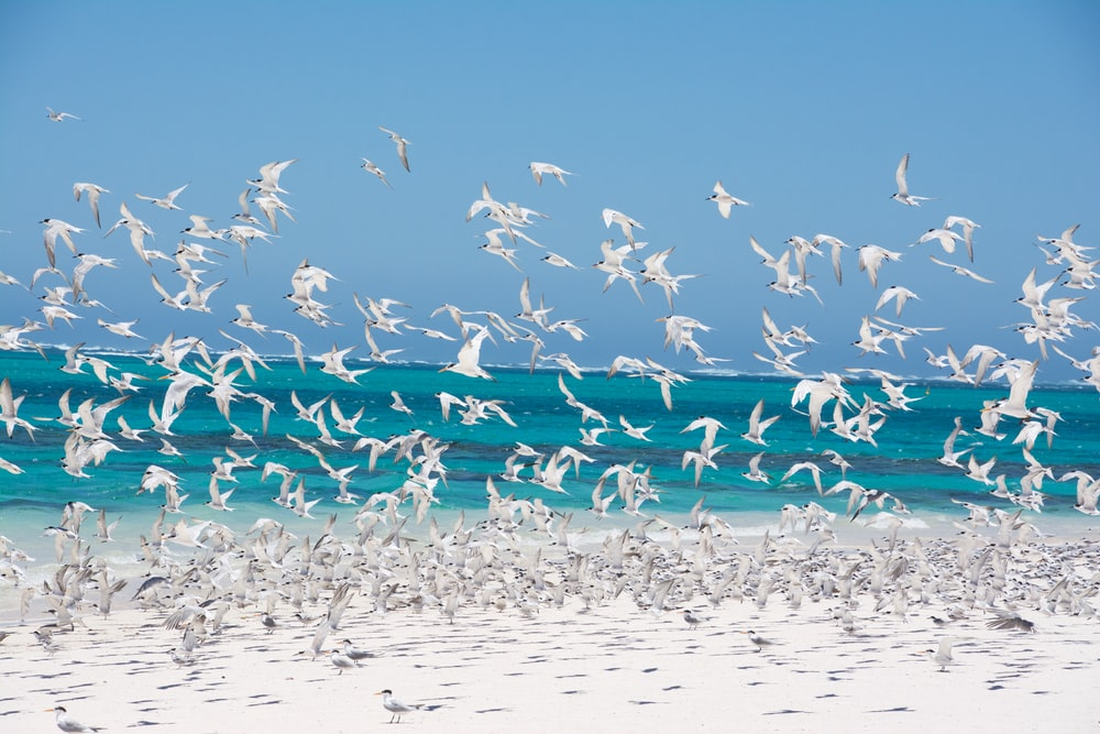 flock of birds on shore
