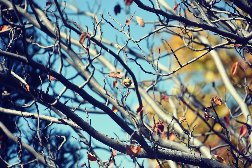 tree branches under daylight