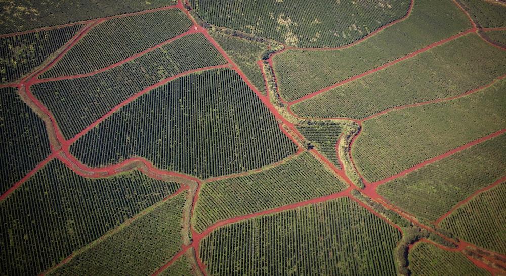 birds eye photo of fields