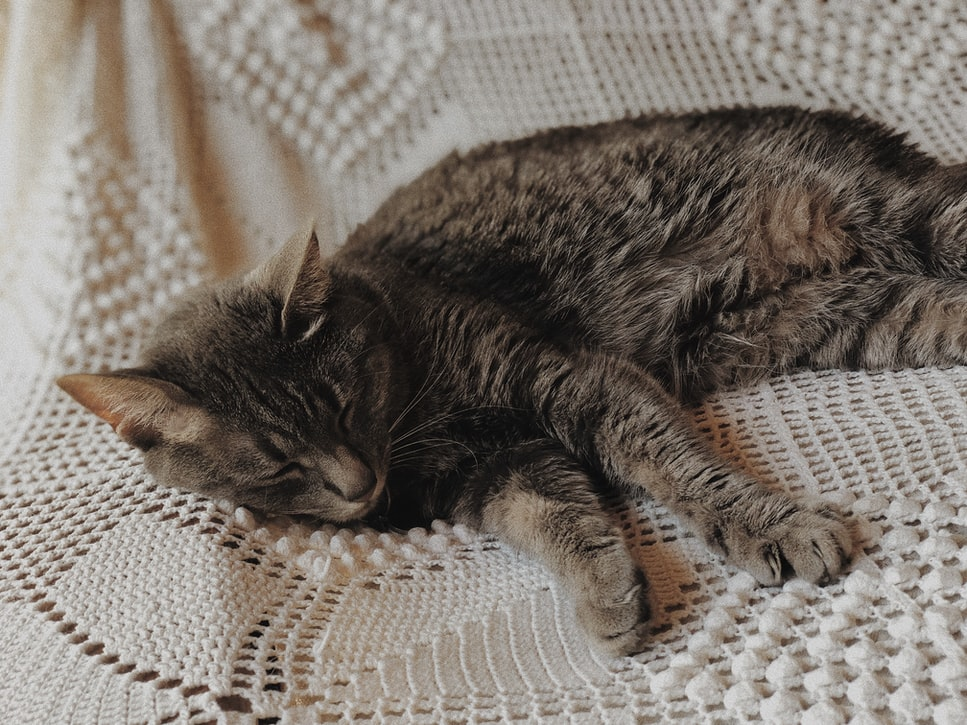 DIY No Sew Cat Hammock   25 Adorable DIY Projects You and Your Pet Will Be Fascinated About