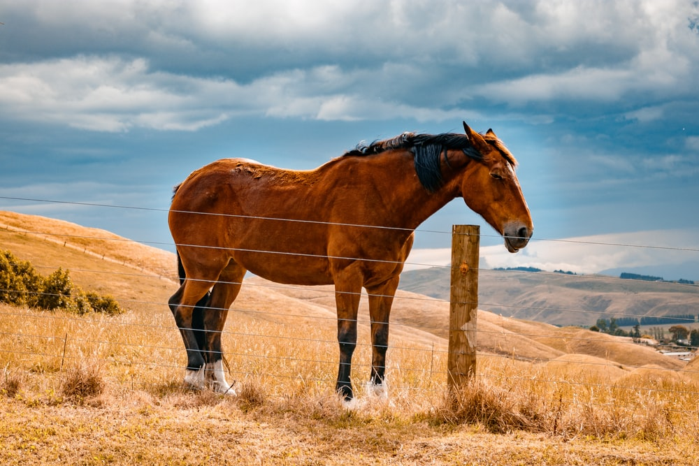 brown horse standing near fence during daytime