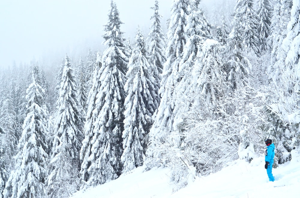 person wearing snow suit standing near snow-covered pine trees