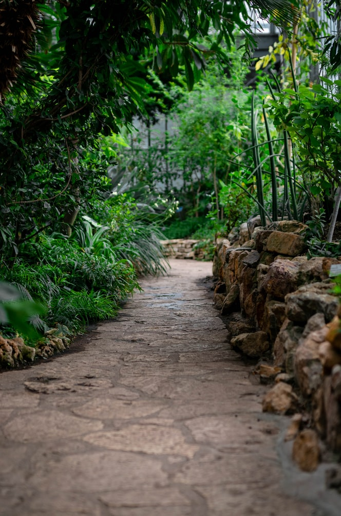 beautiful green garden photo