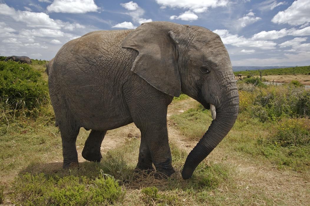 Elephant ride in Srilanka