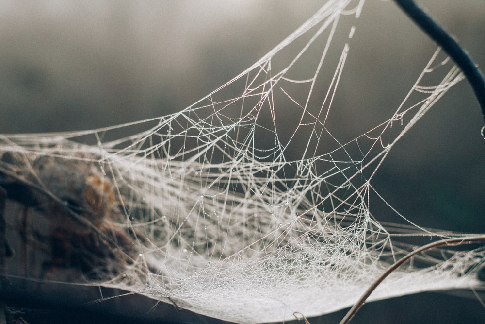 white spider web in selective focus photography