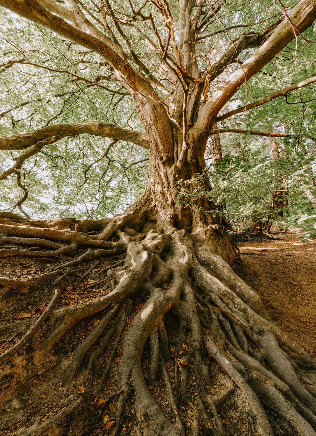 Image result for Our roots are deep in the woods, among mosses, around springs