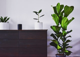 green leafed plant by wooden dress