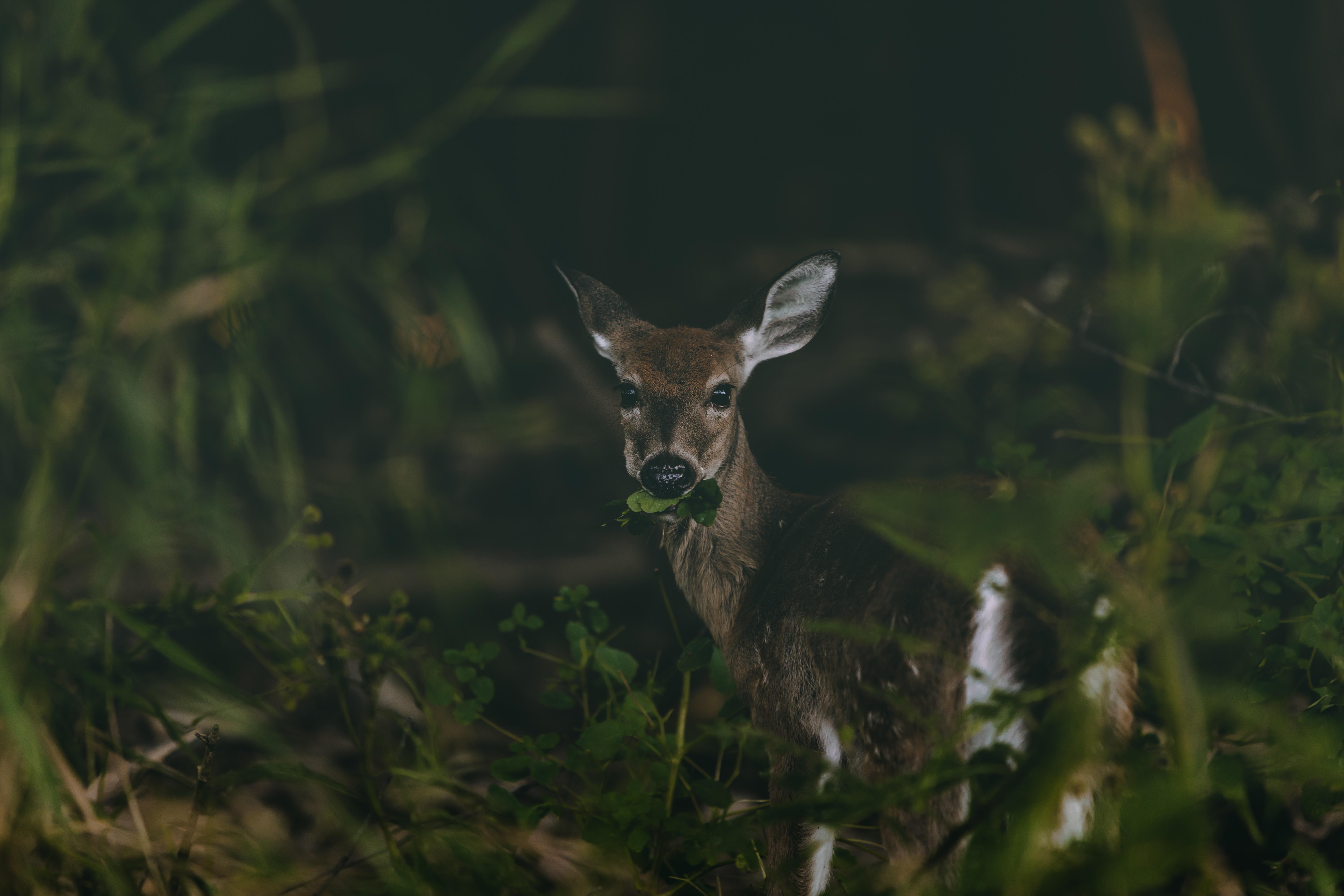 shallow focus photo of brown deer