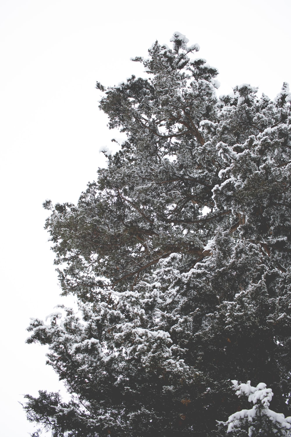 tree covered with snow