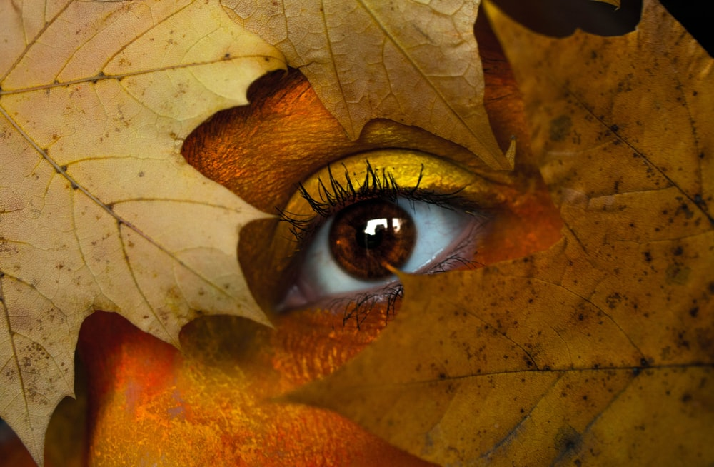 close-up photo of human eyes with brown leafs