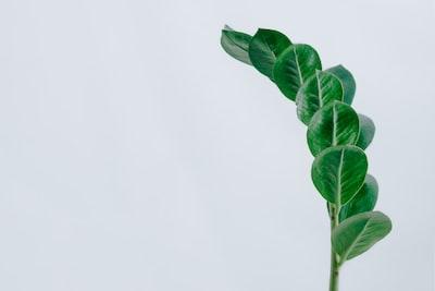 green leaf plant leaf zoom background