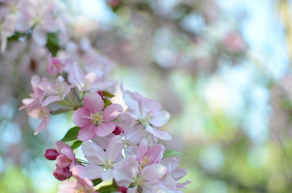 pink flower close-up photo