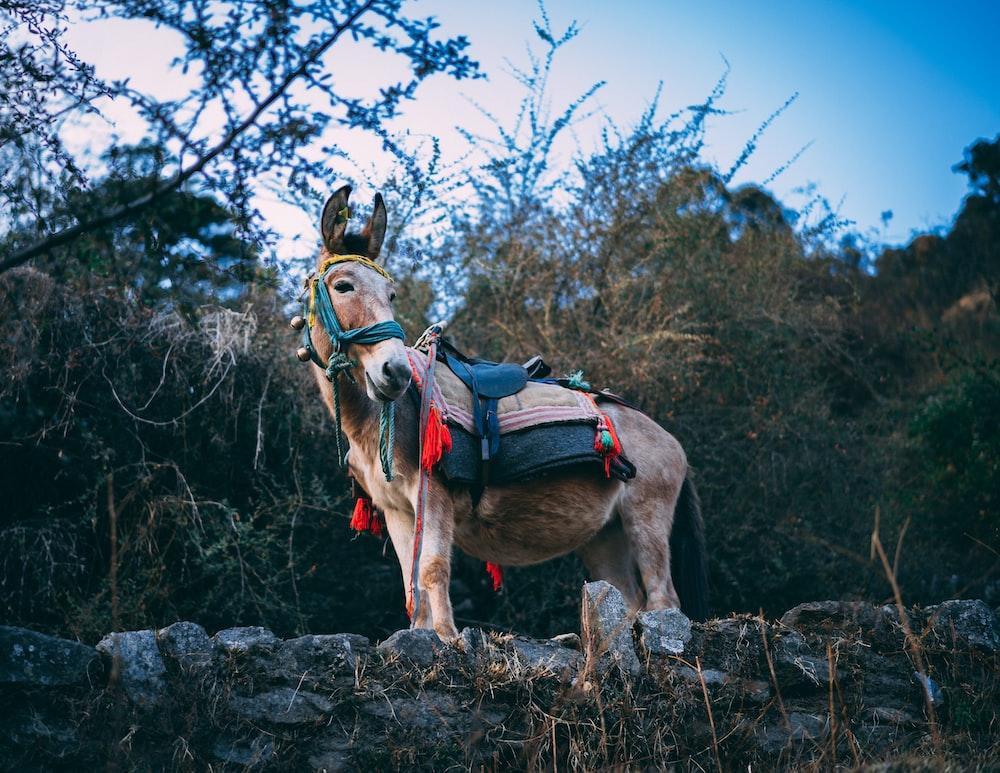 brown donkey standing near tree