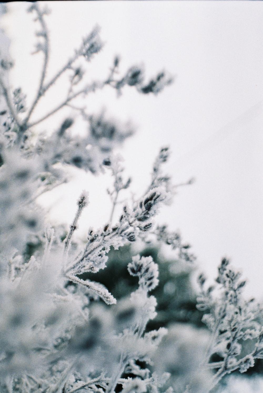 white leafed tree during daytime
