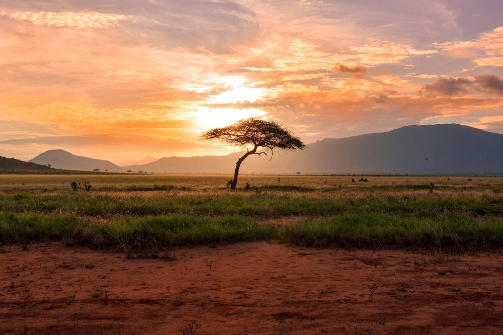 tree between green land during golden hour