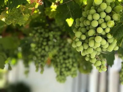 4693. Bor,szőlő, borászatok
