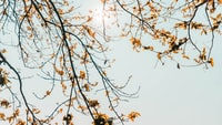 yellow tree branches