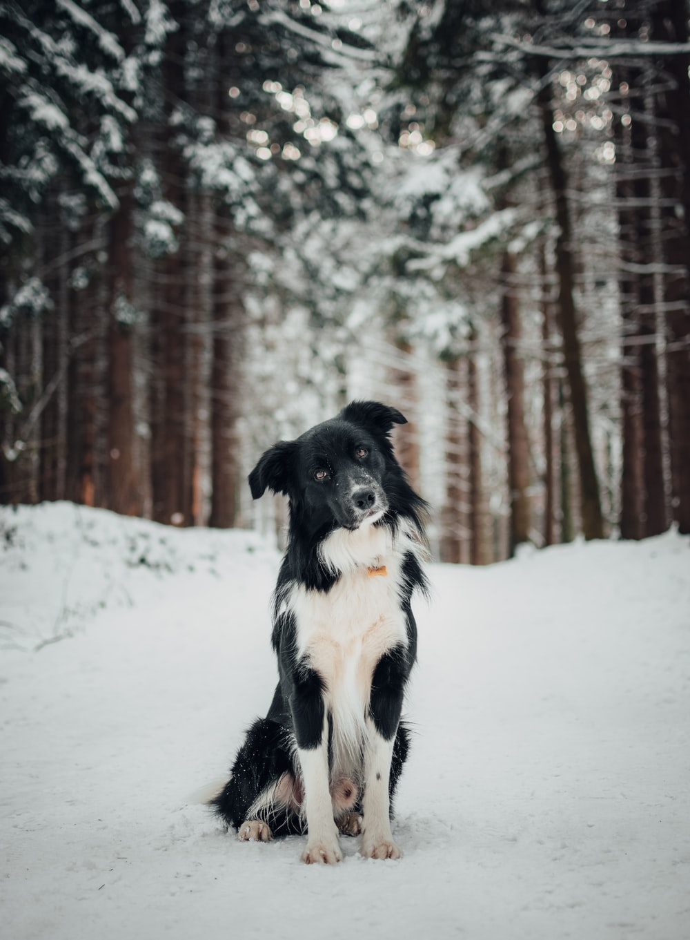 white and black dog on snow field