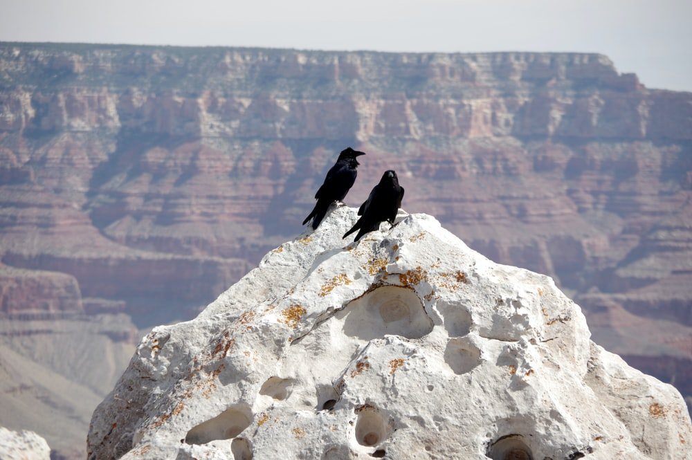 two black birds on rock formation during daytime